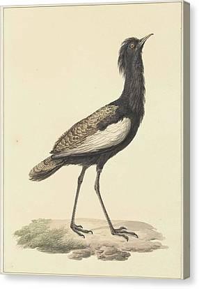 A Bird Standing On The Ground Canvas Print by Pieter Pietersz