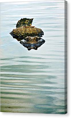 A Bit Of Curiosity Canvas Print by Christopher Holmes