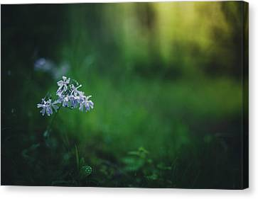 Canvas Print featuring the photograph A Bit Of Forest Magic by Shane Holsclaw