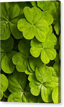 A Bit Of Green Canvas Print by Carrie Cranwill