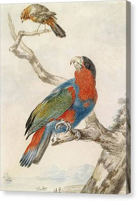 A Black-capped Lory On A Branch And A Flycatcher Against A Coastline Canvas Print