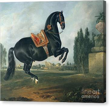 A Black Horse Performing The Courbette Canvas Print by Johann Georg Hamilton