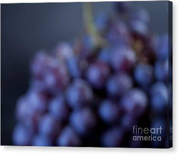 A Blue Bunch Of Grapes Canvas Print by Patricia Bainter