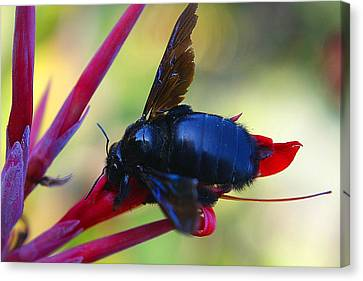 Canvas Print featuring the photograph A Bluebee by DiDi Higginbotham