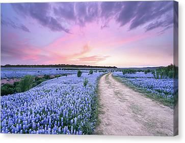 A Bluebonnet Field Under Evening Sky - Texas Canvas Print by Ellie Teramoto