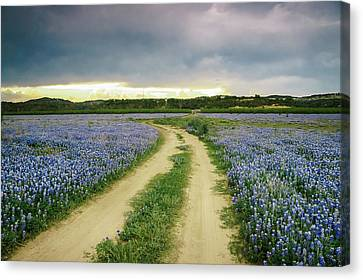 A Bluebonnet Trail Under Stormy Sky - Texas Canvas Print by Ellie Teramoto