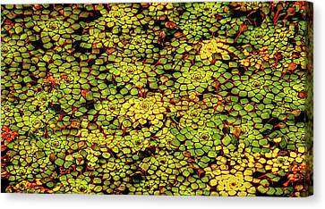 A Botanical Mosaic Canvas Print