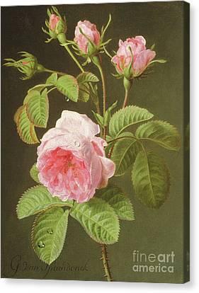 A Branch Of Roses Canvas Print by Cornelis van Spaendonck