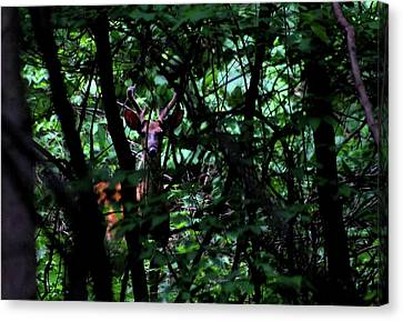 A Buck Peers From The Woods Canvas Print