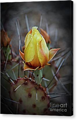 Canvas Print featuring the photograph A Bud In The Thorns by Robert Bales