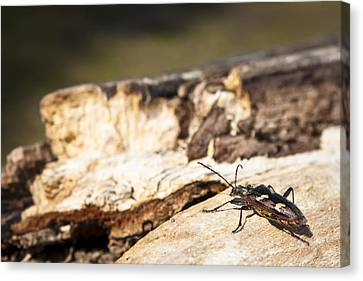 Canvas Print featuring the photograph A Bugs Life by Stewart Scott