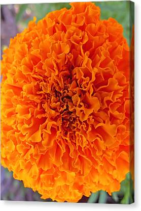 A Burst Of Orange Canvas Print