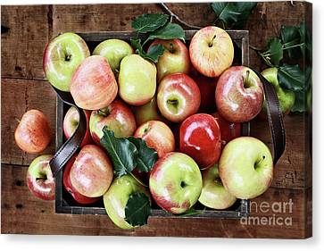 Canvas Print featuring the photograph A Bushel Of Apples  by Stephanie Frey