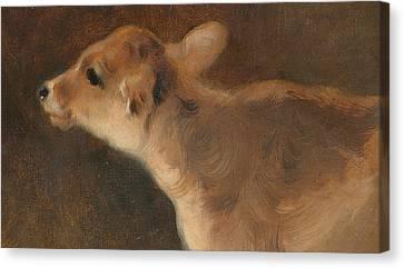 A Calf Canvas Print