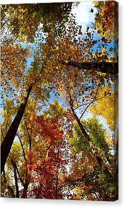 A Canopy Of Color Canvas Print