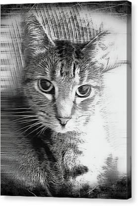 A Cat Illustration Canvas Print by Tom Gowanlock