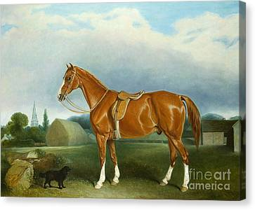 A Chestnut Hunter And A Spaniel By Farm Buildings  Canvas Print