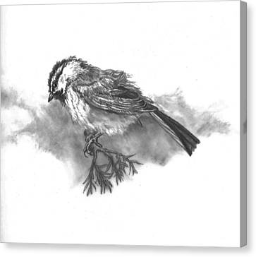 A Chickadee Named Didi Canvas Print by Dawn Senior-Trask