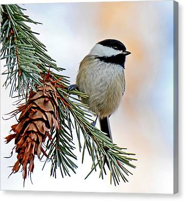 Canvas Print featuring the photograph A Christmas Chickadee by Rodney Campbell