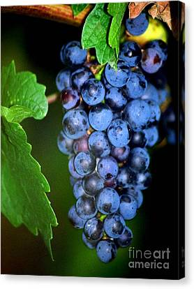 A Cluster Of Cab Canvas Print by Laurel Sherman