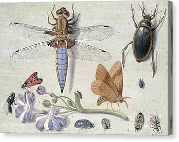 Nature Study Canvas Print - A Cockchafer, Beetle, Woodlice And Other Insects, With A Sprig Of Auricula by Jan Van Kessel