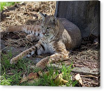 A Comfy Spot  Canvas Print by Capt Gerry Hare