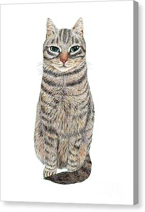 A Cool Tabby Canvas Print