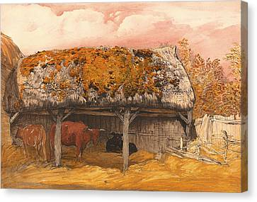A Cow With A Mossy Roof Canvas Print by Mountain Dreams