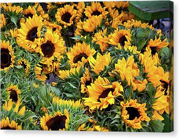 Canvas Print featuring the photograph A Crowd Of Sunflowers by Susan Cole Kelly
