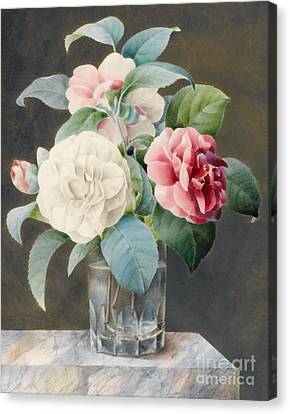 A Cut Glass Vase Containing Camelias Canvas Print by Sarah Bray