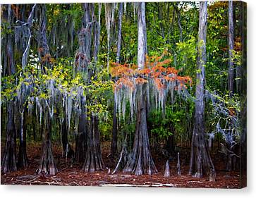Canvas Print featuring the digital art A Cypress Fall by Lana Trussell