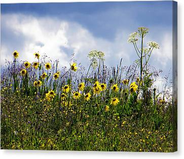 Canvas Print featuring the photograph A Daisy Day by Karen Shackles