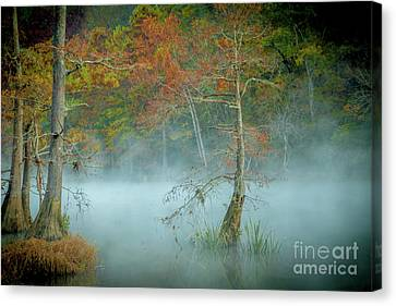 Canvas Print featuring the photograph A Dancing Cypress by Iris Greenwell