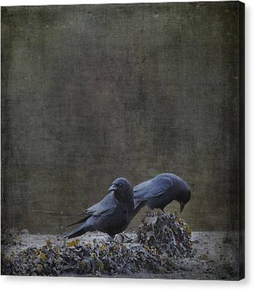 Canvas Print featuring the photograph Blackbirds At The Beach by Sally Banfill