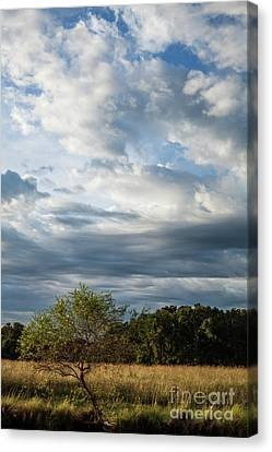 Canvas Print featuring the photograph A Day In The Prairie by Iris Greenwell