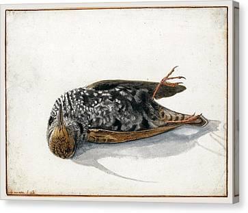 A Dead Starling Canvas Print by Rochus van Veen