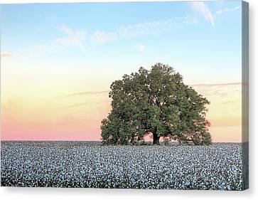 Canvas Print featuring the photograph A Deeply Southern Sunrise by JC Findley
