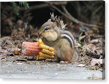 Southern Indiana Autumn Canvas Print - A Delicious Treat - Chipmunk Eating Corn by Scott D Van Osdol