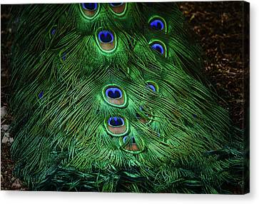 A Different Point Of View Canvas Print by Elaine Malott