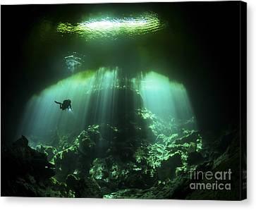 A Diver In The Garden Of Eden Cenote Canvas Print