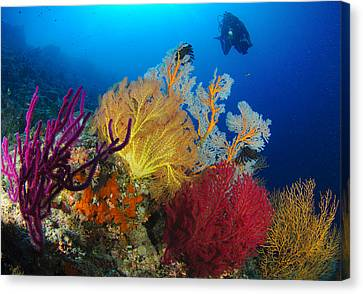 A Diver Looks On At A Colorful Reef Canvas Print by Steve Jones