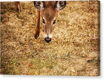 Four Animal Faces Canvas Print - A Doe Encounter by Karol Livote
