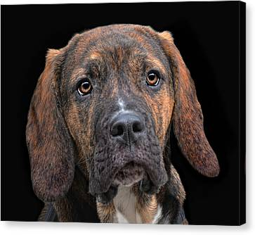 a dog named Lucifer Canvas Print