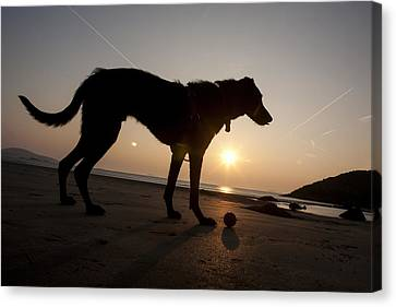 A Dog With His Ball At Sunset Canvas Print by Paul Quayle