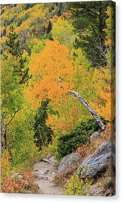 Canvas Print featuring the photograph Yellow Drop by David Chandler