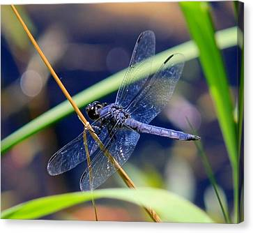 A Dragonfly  Canvas Print by James Lafnear