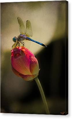 A Dragonfly Rests Momentarily On A Lotus Bud Canvas Print