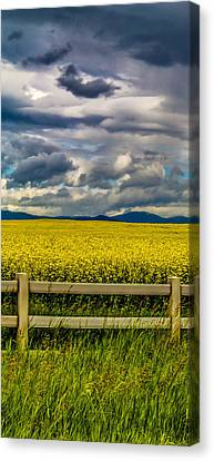 A Drink For Canola Triptych 1 Canvas Print