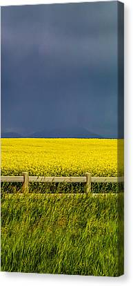A Drink For Canola Triptych 2 Canvas Print