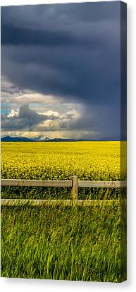 A Drink For Canola Triptych 3 Canvas Print
